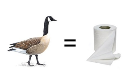 goose toilet paper